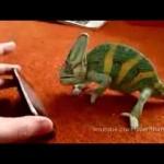 Un camaleón y las nuevas tecnologías