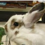 ¿Que comprarías si fueras un conejo?