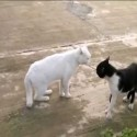 El gato de Bruce Lee