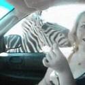 De safari con las cebras