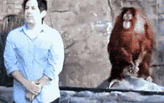 Mono imitador