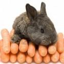 El conejo y las zanahorias