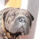 Los perros de Jean Claude Van Damme