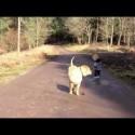 El paseador de perros junior