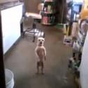 Ai se eu te pego VS perro billy eliot