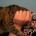 Efectos secundarios de la hierba para gatos