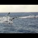 Flyboard: Volando sobre el agua