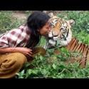 Mi amigo el tigre