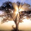 El árbol de la felicidad