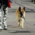 Paseador de perros Nivel Pro
