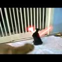El gato jedi