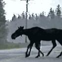 ¿Un burro con ocho patas?
