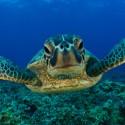 La venganza de la tortuga