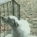 El perro más listo del mundo