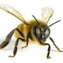 ¡Cuidado una abeja!