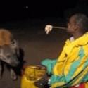 Alimentando a las hienas