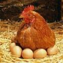 Huevos del día