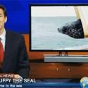 Liberad a la foca