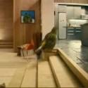 La caseta del pájaro