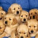 Como perros (2ª parte)