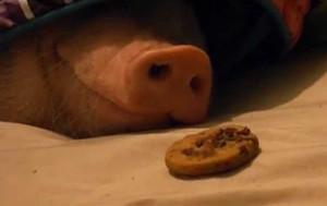 ¿Una galletita?