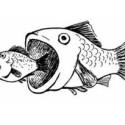 Siempre hay un pez más grande