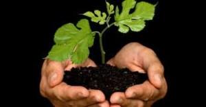 Plantar un árbol - tontaKos.com